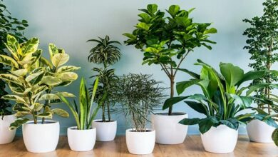 Photo of Plants Suitable to Grow Around Your Patio!