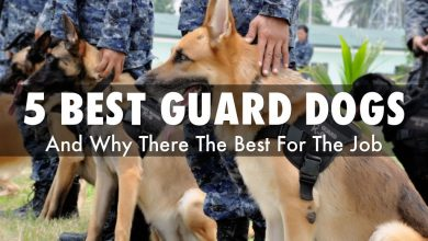 Photo of 5 Best shelter and family guards dogs