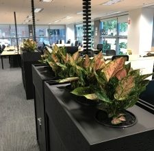 Photo of The Advantages That You Gain From Fresh Indoor Plants Melbourne