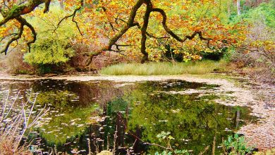 Photo of Fall In Love With Fall: 5 Reasons Why Killarney National Park Is Best Visited In Autumn