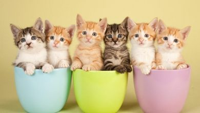 Photo of What Are The Different Types Of Breeds Available At Cattery Near Me?