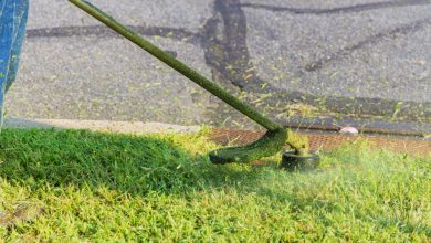 Photo of 11 Things To Know About Good Garden Maintenance